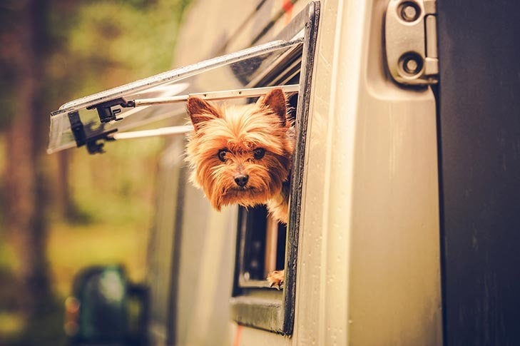 Pet-Friendly RV Security Systems