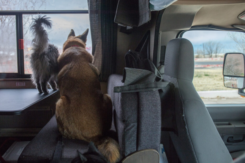 A cat and dog in an RV looking out the window
