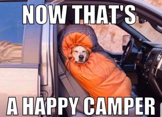 Aug Camping Memes (6)