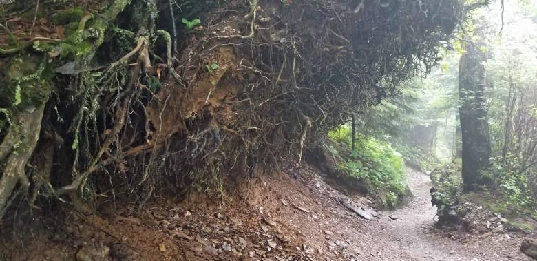 Alum Creek Trail