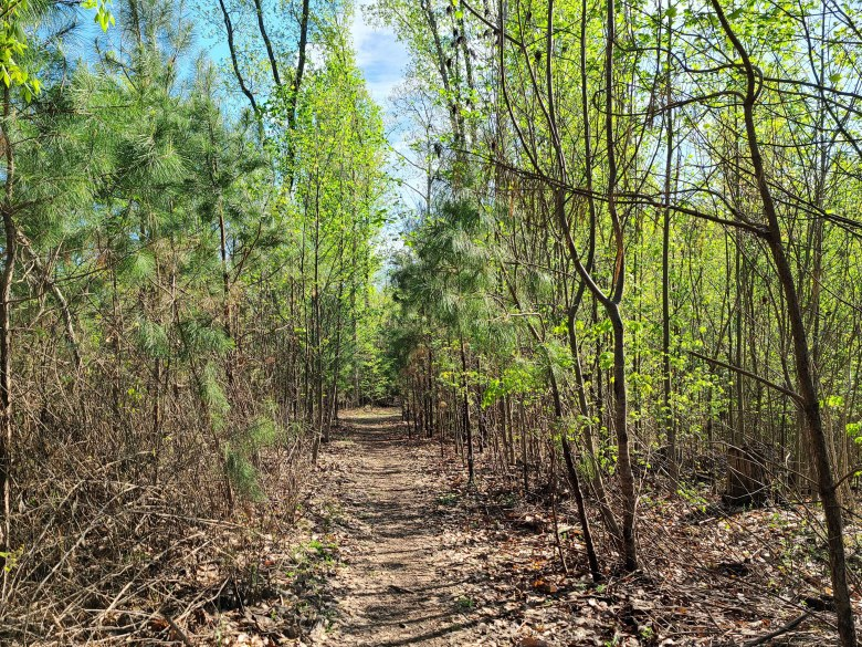 hiking trail at Lake Guntersville State Park