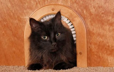 cat hole