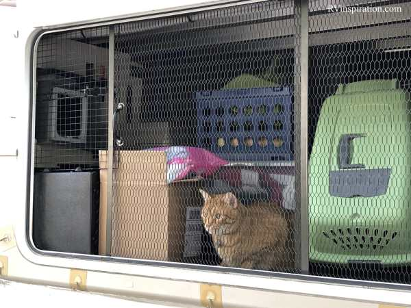 Kitty enjoying fresh air behind a screen covering the storage area under our RV