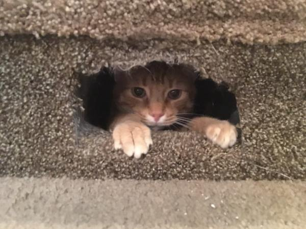 Kitty in his hole