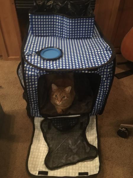 Travel enclosure for cat