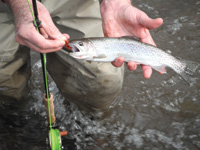 Cutthroat trout provide action at Possum Creek.