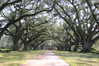 The Oak Alley Antebellum Plantation welcomes tourists.