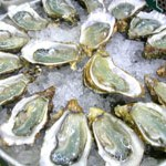 Oysters Abound at Willapa Bay