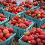 A Guide to Roadside Fruit Stands