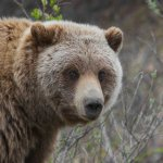 The Best Weapon to Survive a Bear Attack Isn't What You Think It Is