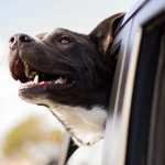 Five Essential Things RVing Dogs Need for the Road