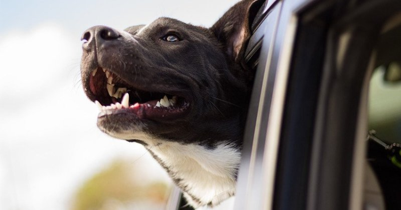 Four Essential Things RVing Dogs Need for the Road