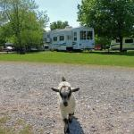 Camp Among Adorable Animals At These Charming Farms