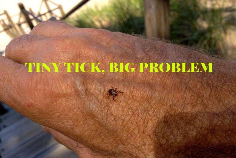 Tiny Tick Big Problem