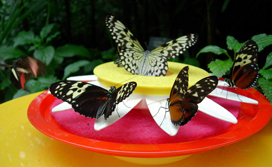 ButterflyConservatory_dish