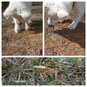 Hey mom, these grasshoppers are pretty tasty