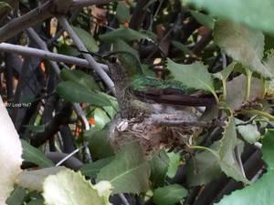 Do you see the hummingbird?