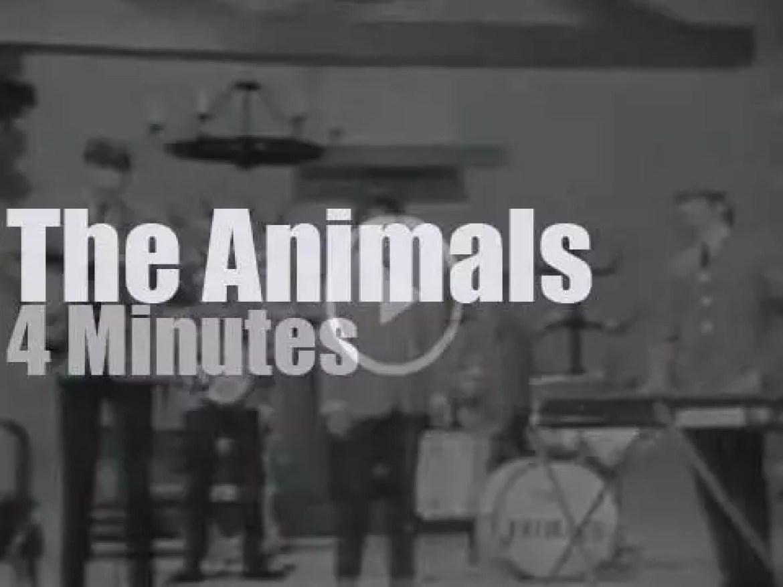 On TV today, The Animals at 'Hullabaloo' (1965)