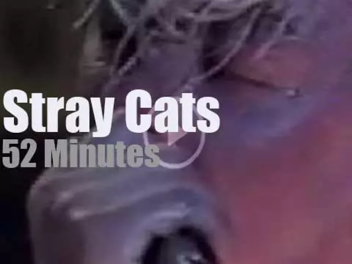 Stray Cats rock Montreux (1981)