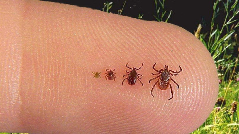 Keeping Ticks and Pests from Crashing Your Campsite