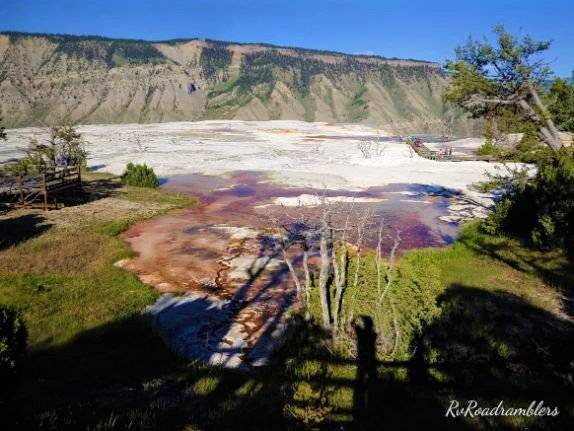 Picture of Grassy Spring at Mammoth Hot Springs in Yellowstone National Park