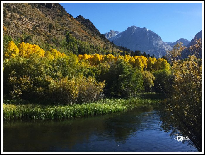 Yellow-Aspen-by-Rush-Creek-and-Carson-Peakii