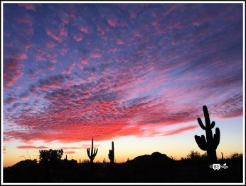 Sunset at Sonoran Desert. Mesa, Arizona