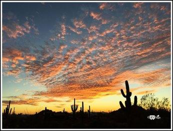 Saguaros and Sunset. Mesa, Arizona
