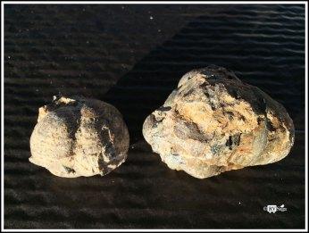 Thuner Egg Nodules