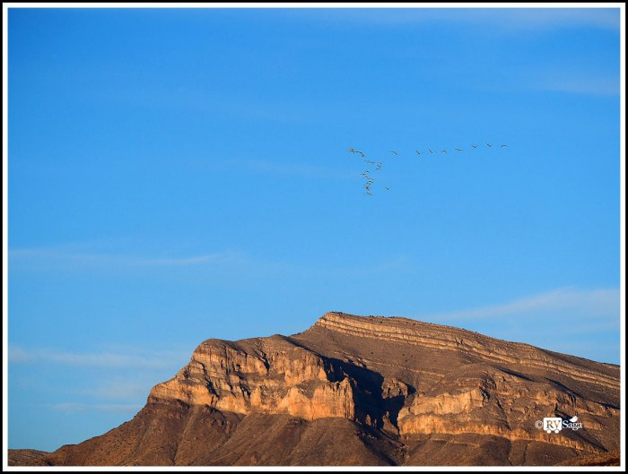 Sandhill Cranes Flying Above Caballo Mountains