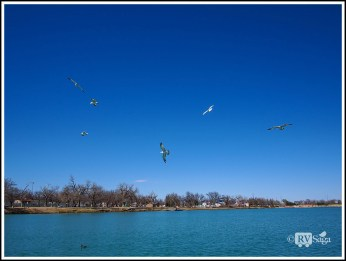 Seagulls Flying Above Pecos River at Carlsbad