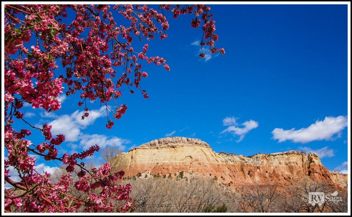 Blossoms-and-Piedra-Lumbre