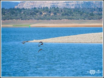 Ducks-in-Flight