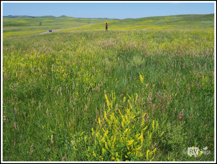 A-Sea-of-Wildflowers-on-the-Prairie
