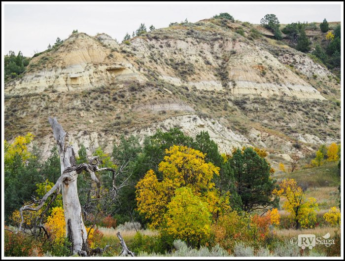 Dead-Tree-and-Fall-Colors-Against-Rock-Formations