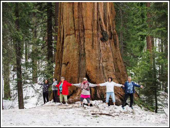 Meeting The Giants at Sequoia and Kings Canyon National Parks
