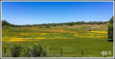 Fields Painted with Colorful Wildflowers Near King City