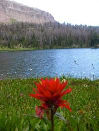 Beautiful Lake and FLower