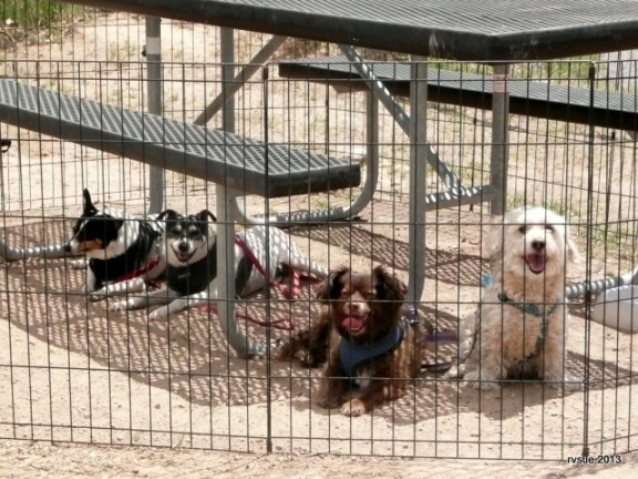 Hanging out with canine pals at Sand Island, Utah