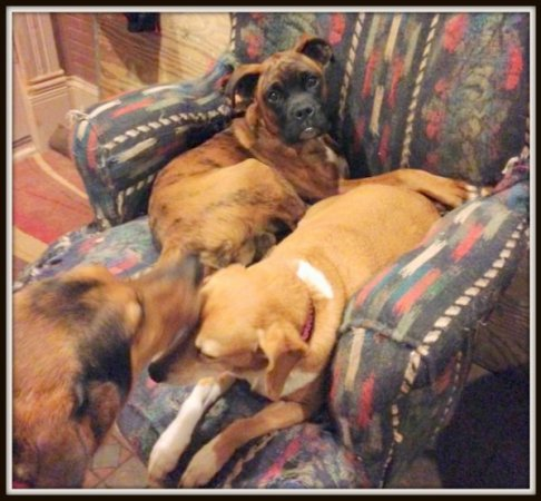Romeo, Janie, Woody