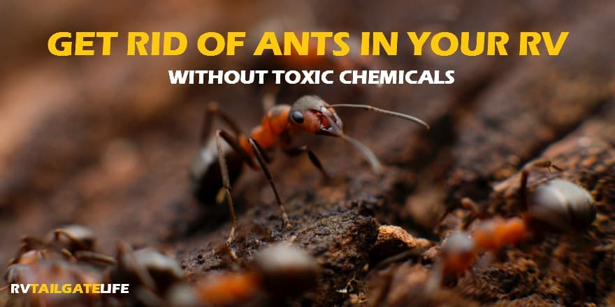 How to get rid of ants in the rv without toxic chemicals rv get rid of ants in the rv without using a bunch of toxic chemicals harmful to ccuart Images
