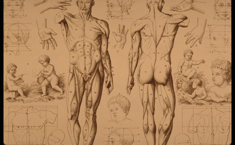 Stupid Human Body