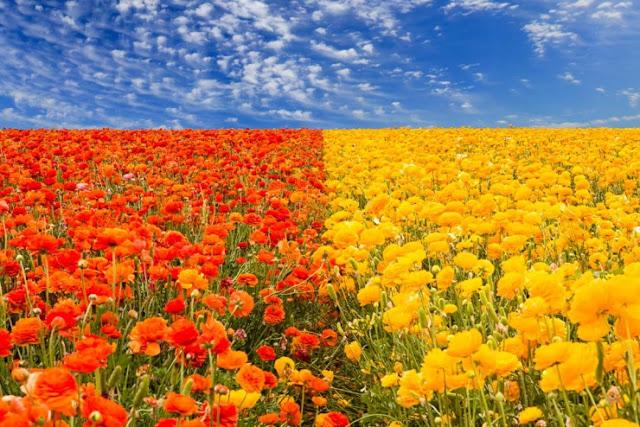 حدائق الأزهار الملونة