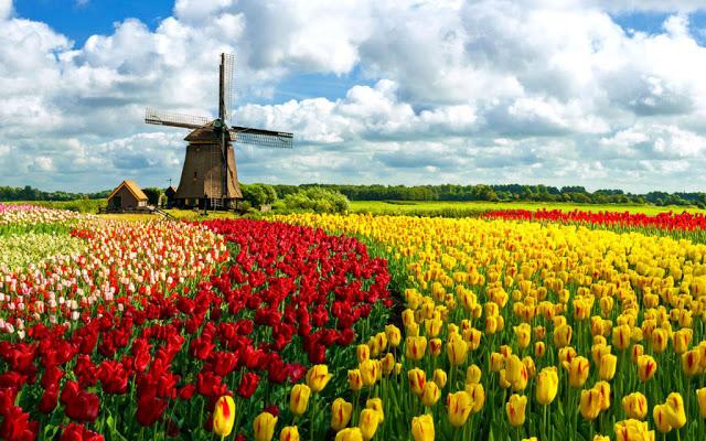 أماكن ساحرة - الحقول الملونة في هولندا