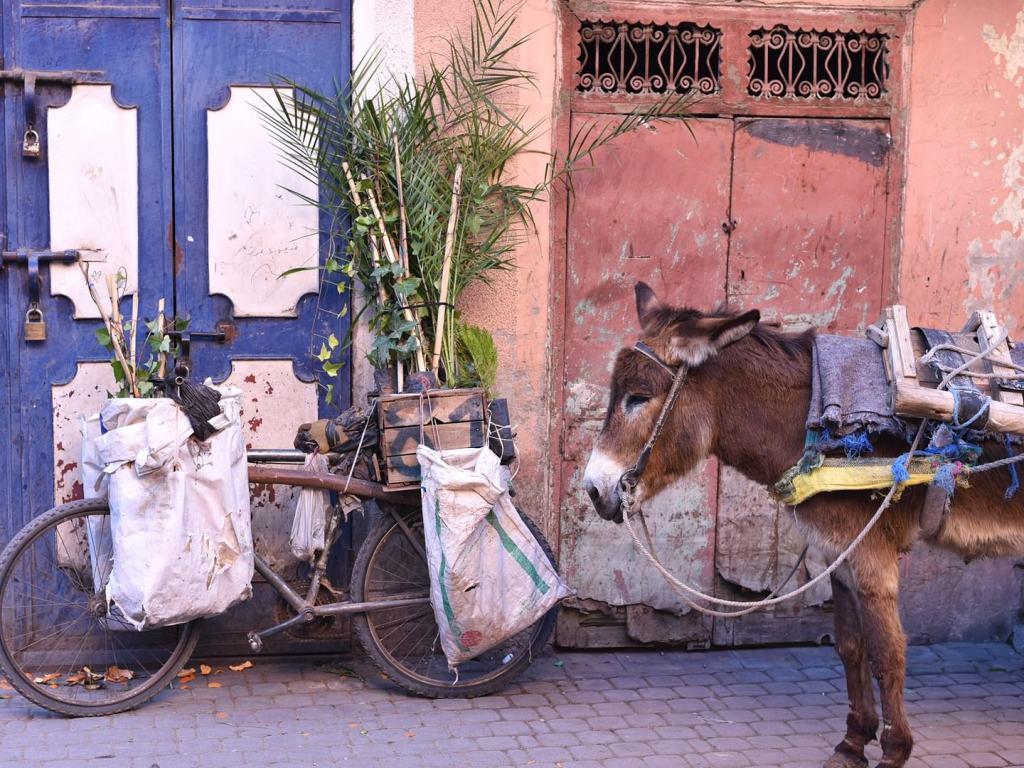 فاس البالي ، المغرب - أماكن جميلة خالية من السيارات