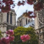 كاتدرائية نوتردام دي باريس