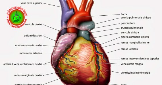 Causes of Angina Pectoris