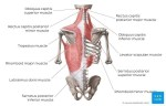 How do you massage the trapezius trigger points?