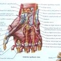 Short Muscles Of Hand