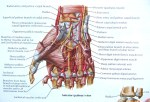 Short Muscles Of Hand – Origin, Nerve Supply, Functions
